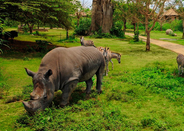 Bali Safari Rhino Package