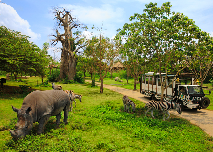 Bali Safari Tour - Activities Package in Bali