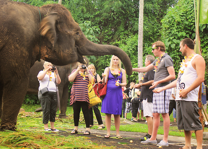 Bali Zoo Elephants - Activities Package in Bali