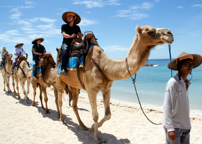 Camel Safari Tour - Activities Package in Bali