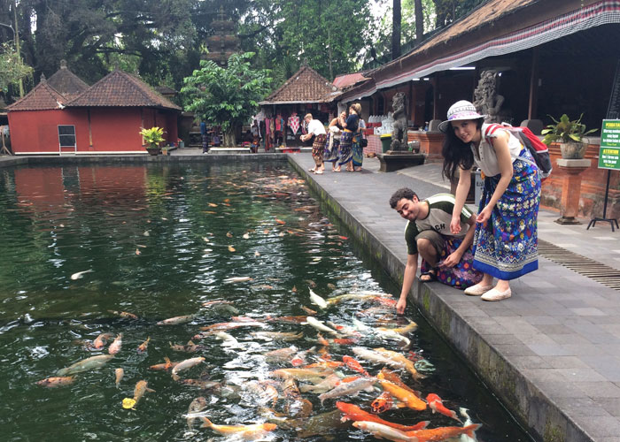 Feeding Koi At Tirta Empul