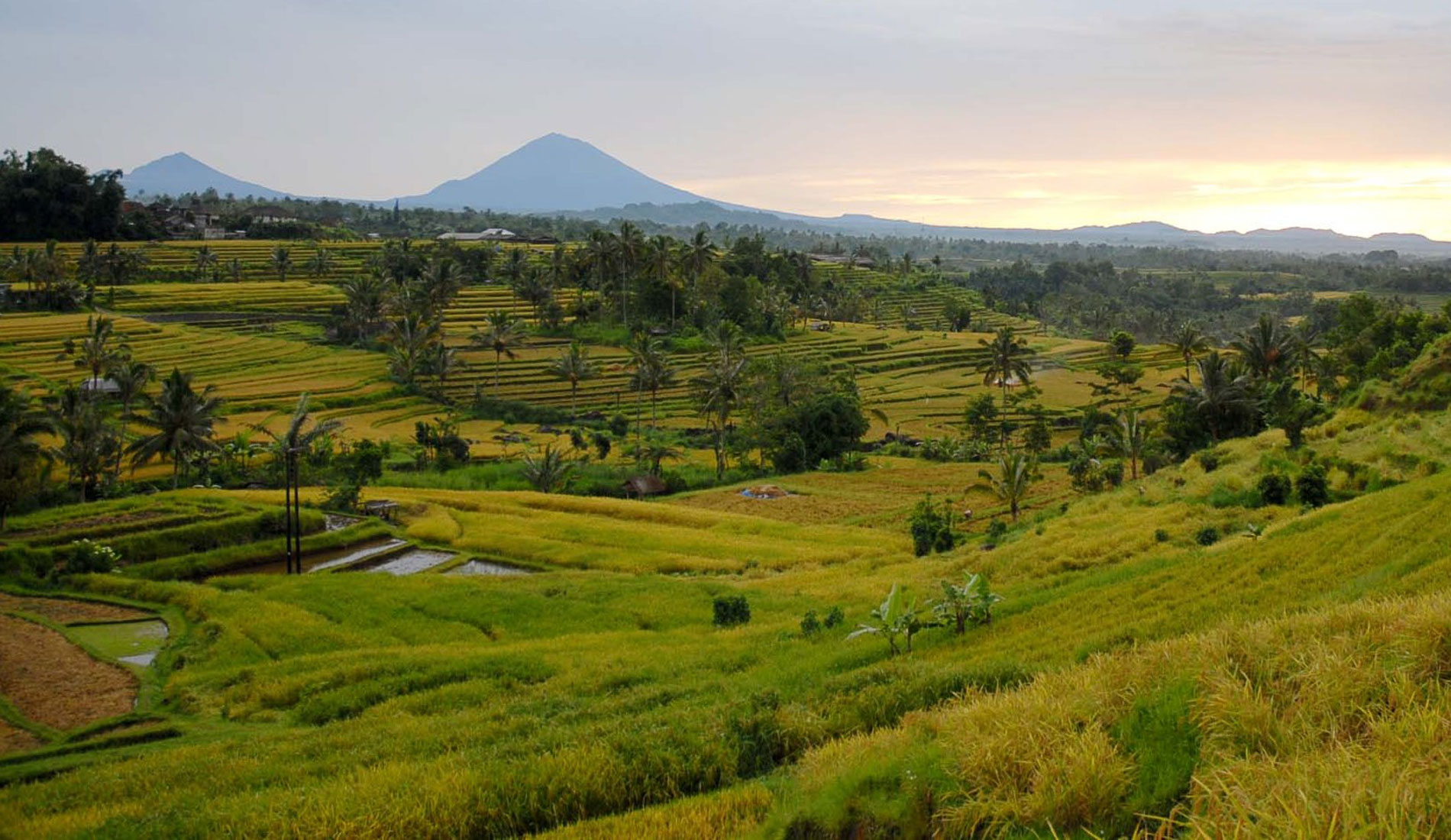 Jatiluwih - Things To Do in Bali Tours Activities