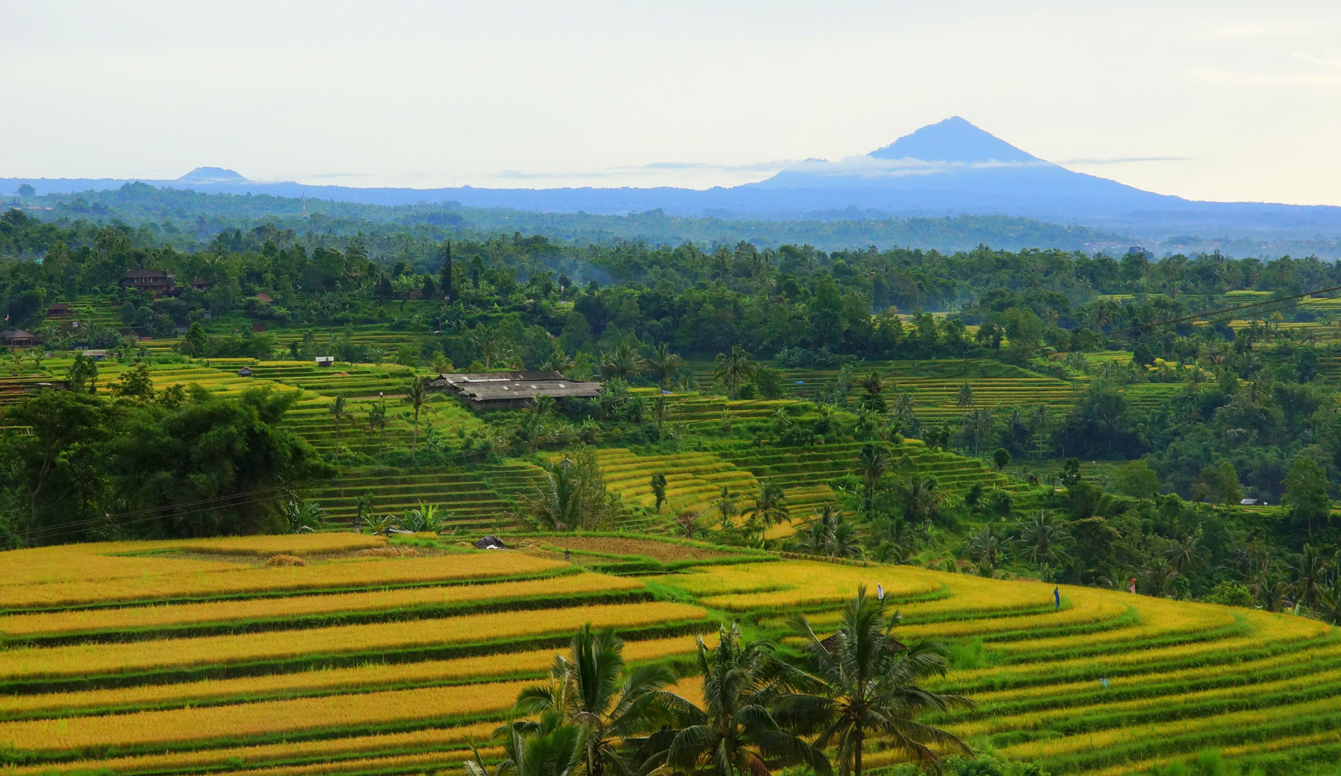 Jatluwih - Things To Do in Bali Tours Activities