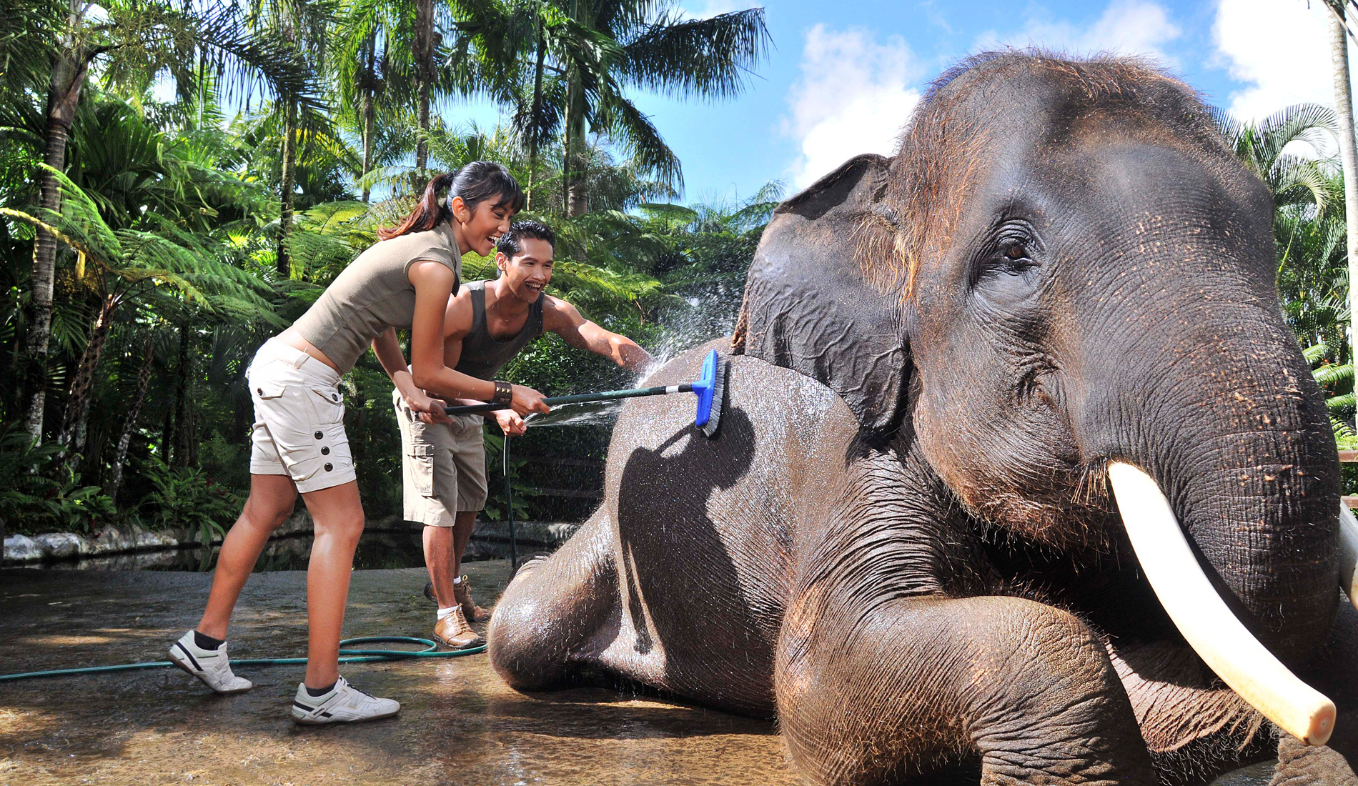 MASON ELEPHANT WASHING - Things To Do in Bali Tours Activities