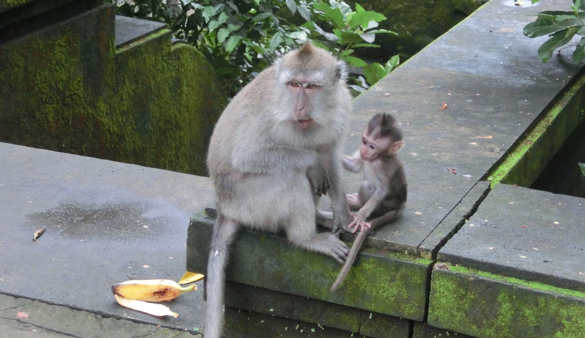 MonkeyForest - Things To Do in Bali Tours Activities