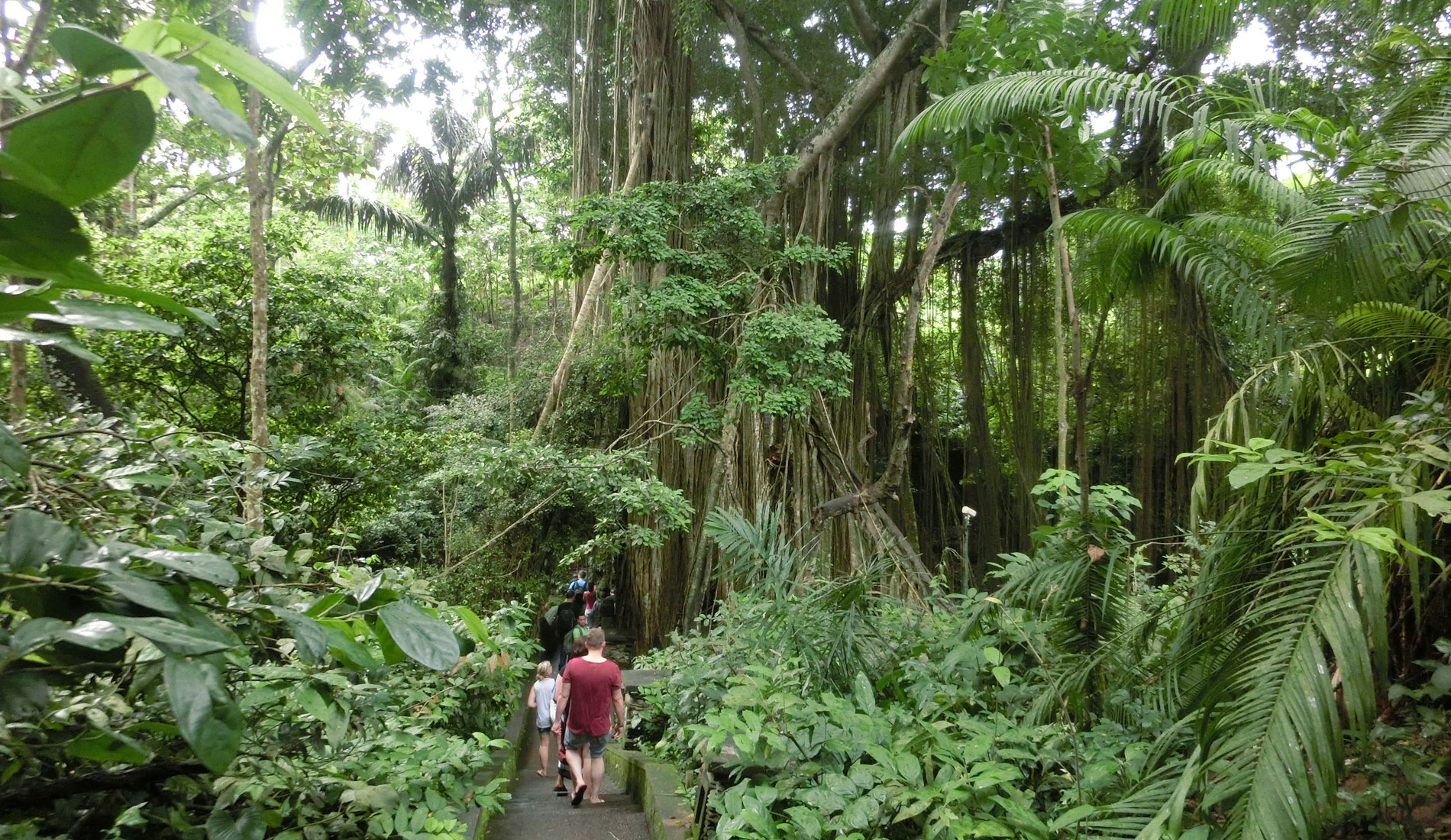 MonkeyForest - Bali Tours Activities