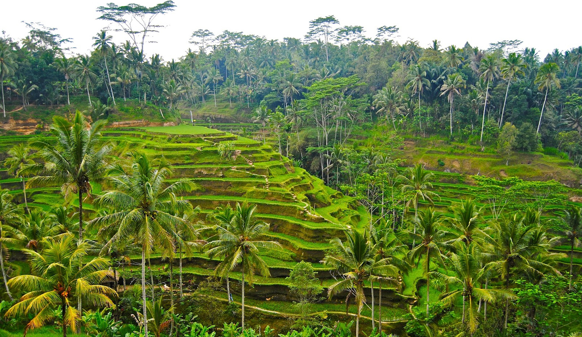 Rice Terrace Ubud Bali - Bali Private Transport and Tour in Bali
