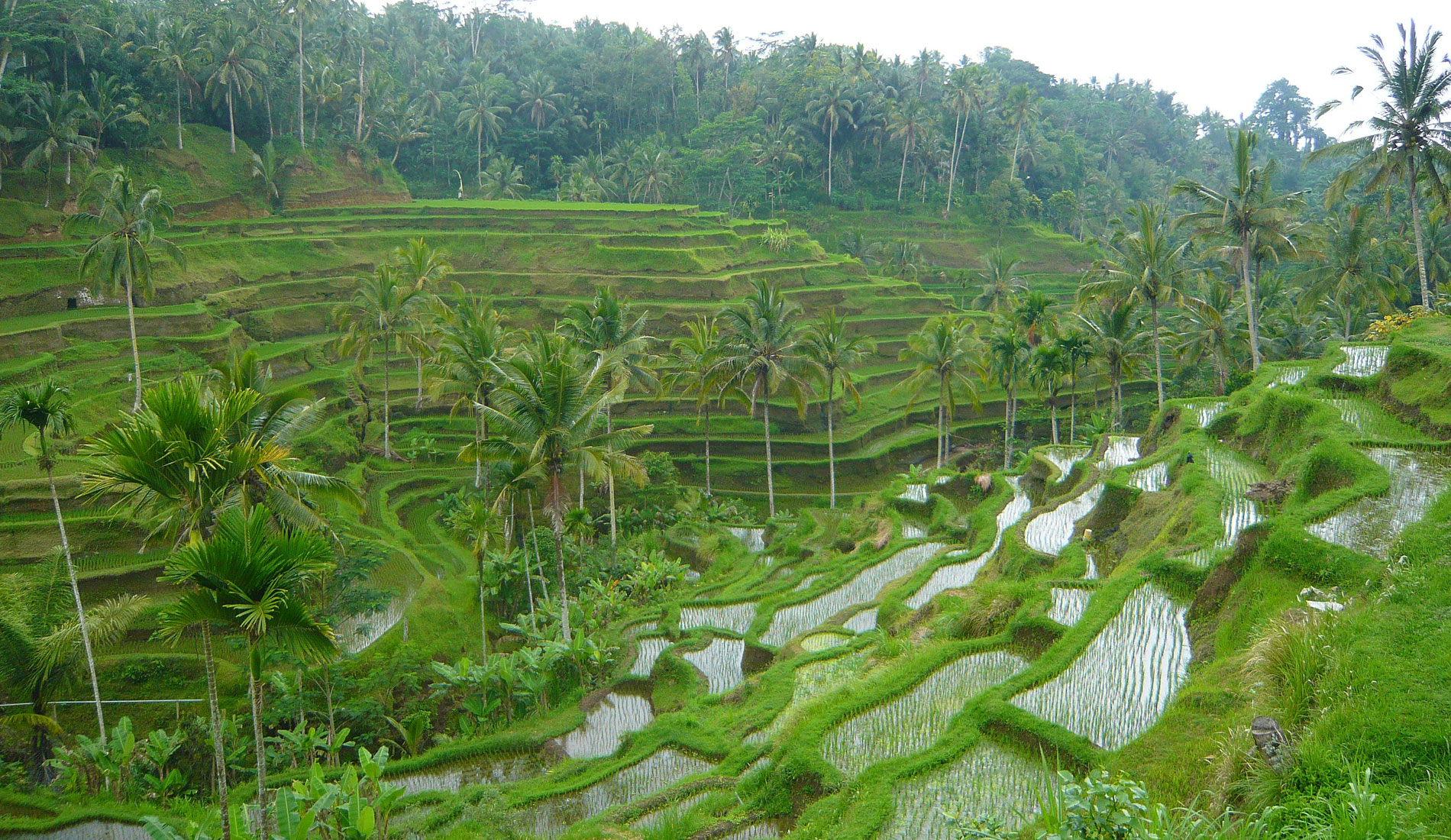 Tegalalang - Bali Tours Activities