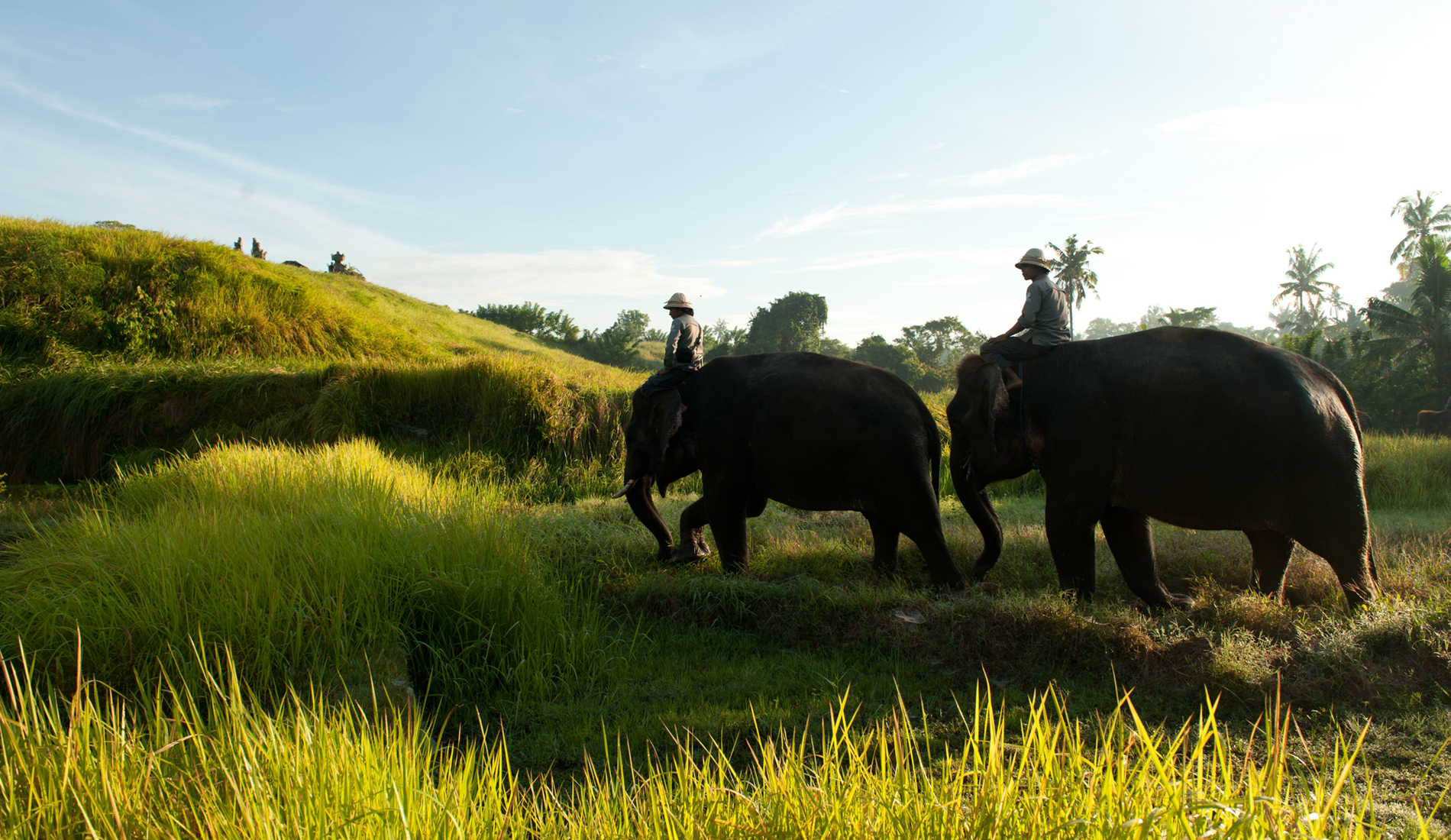 Bali Elephant Ride - Bali Private Transport and Tour in Bali
