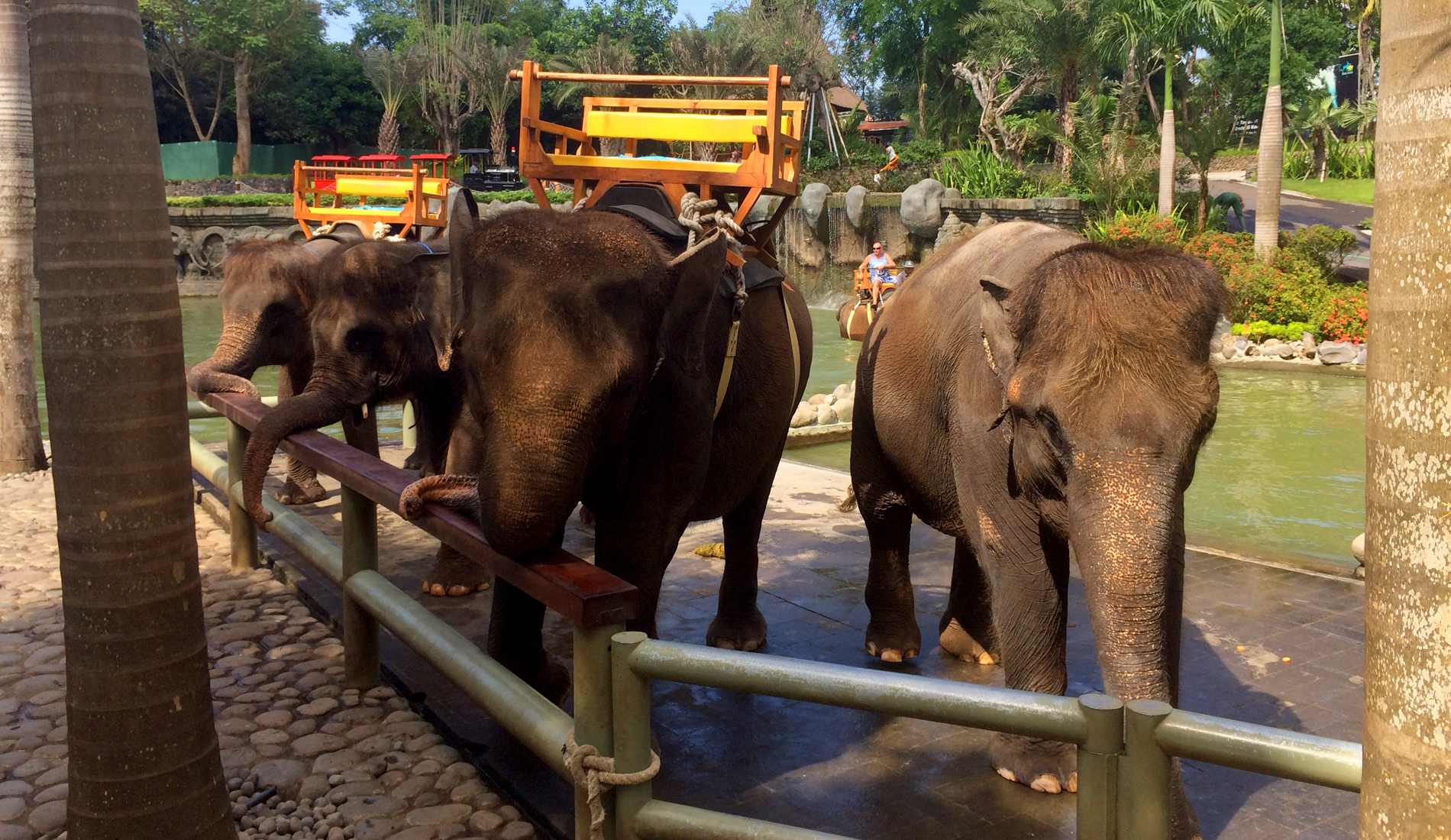 Elephant Safari Ride - Bali Tours Activities