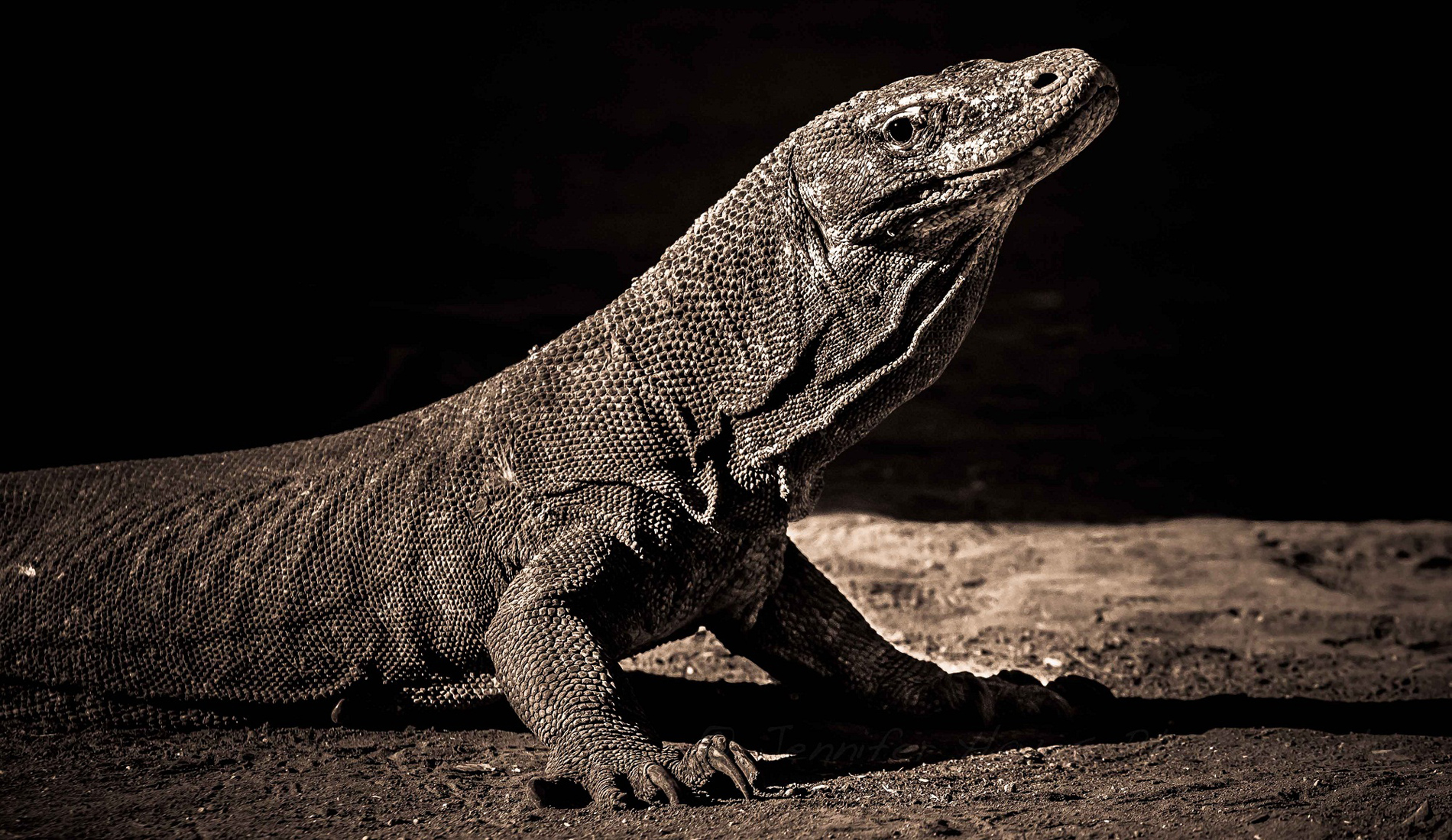 Komodo Dragon - Bali Tours Activities