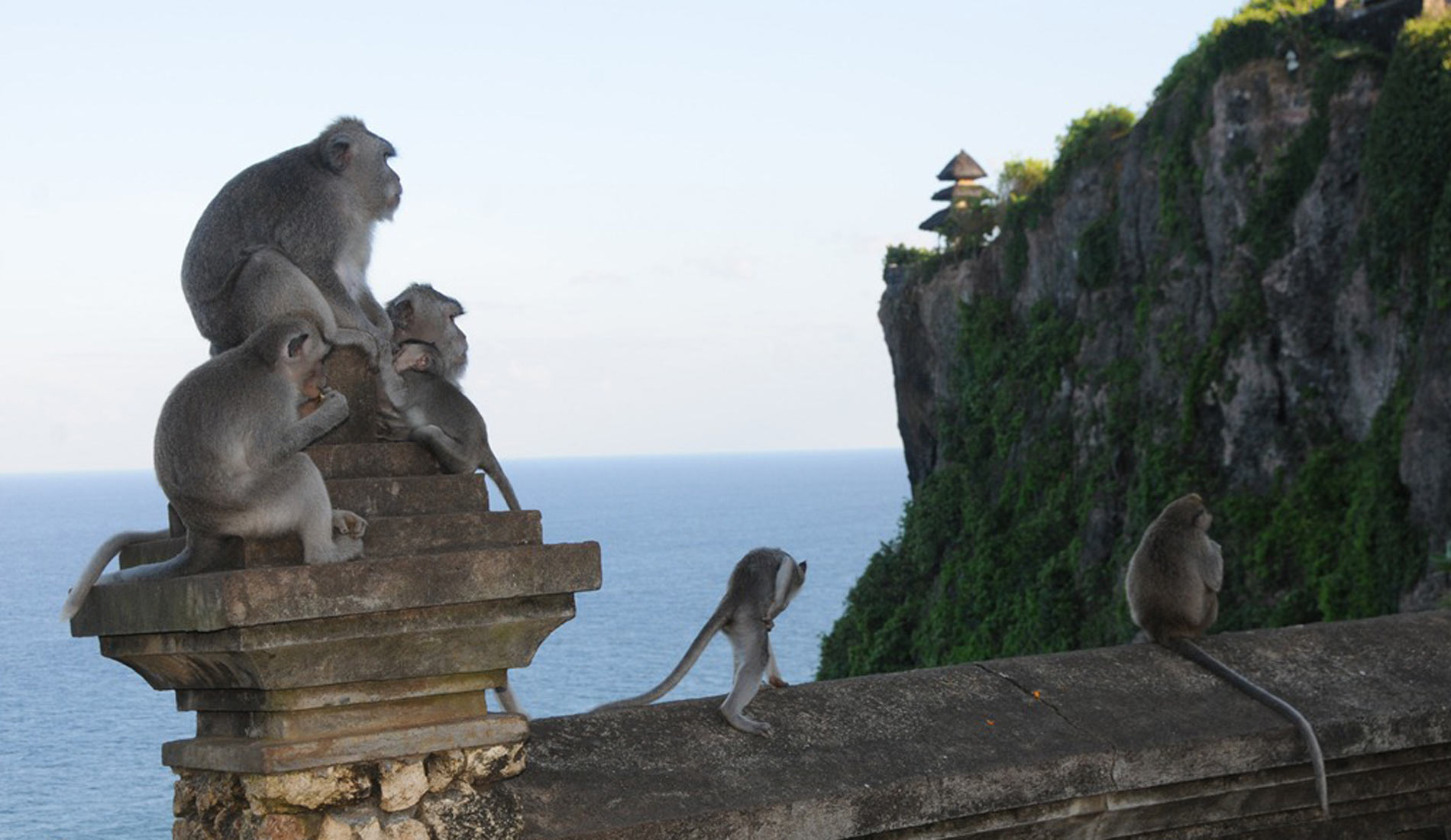 Monkey Uluwatu Temple Bali - Bali Tours Activities