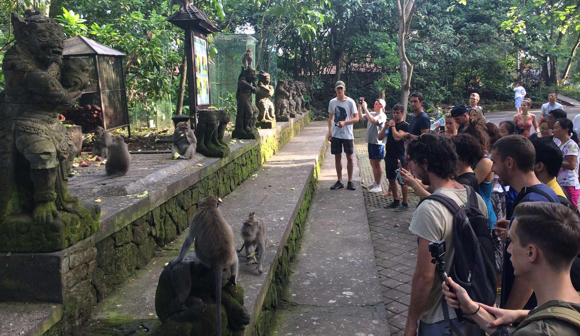 Sacred Monkey Forest Ubud - Bali Tours Activities