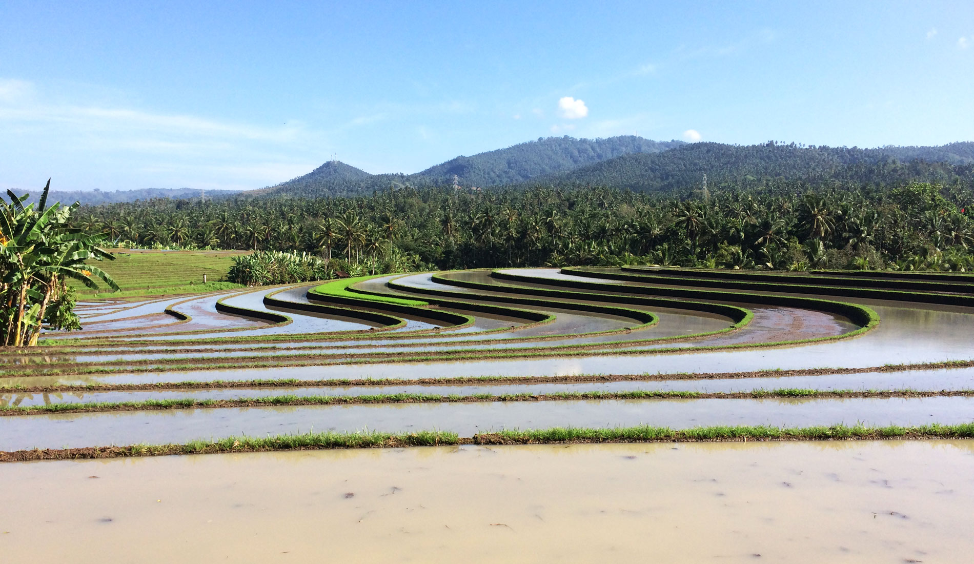 Soka Rice Terrace - Bali Tours Activities