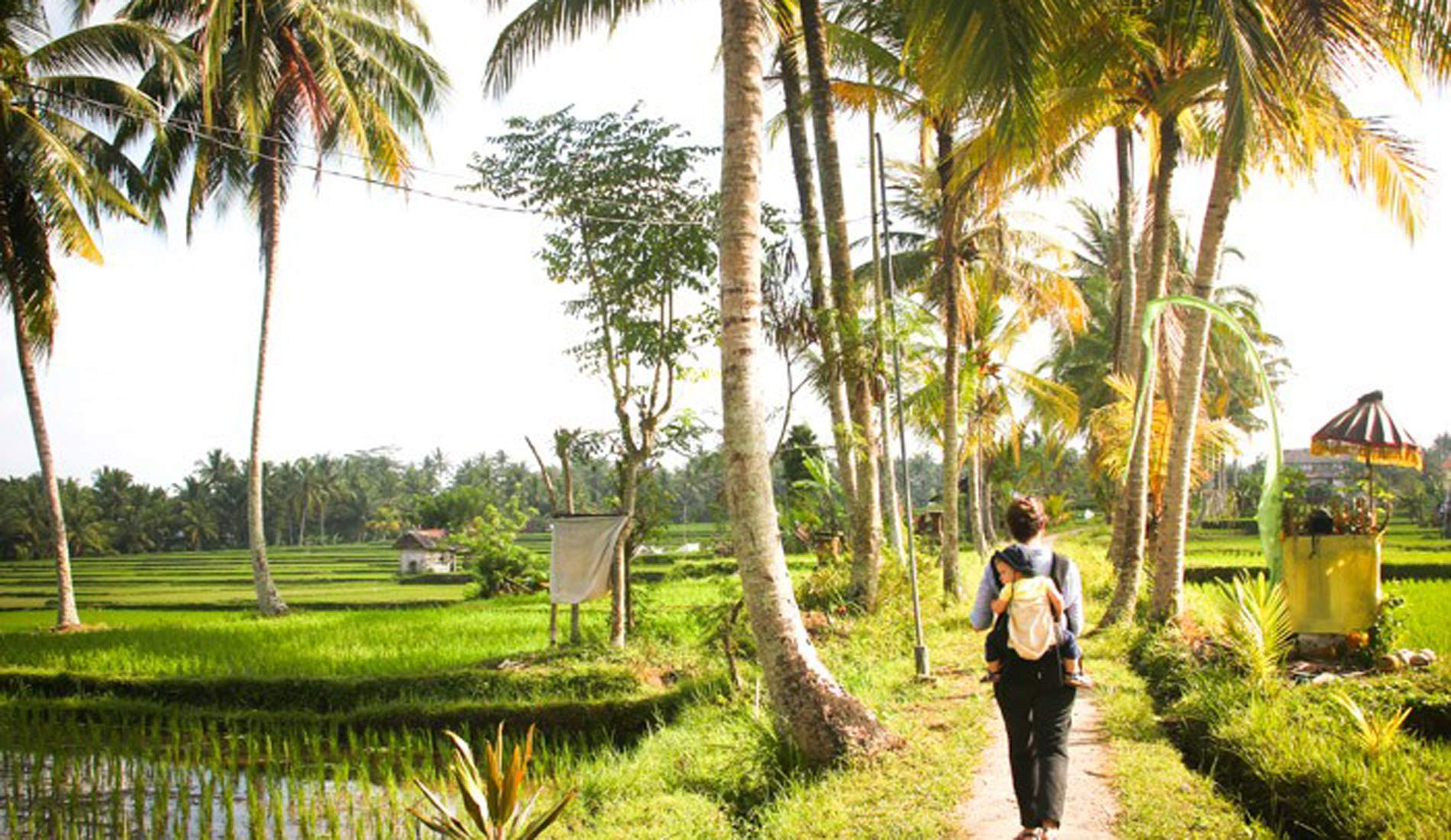 Ubud Ricefield View - Bali Tours Activities