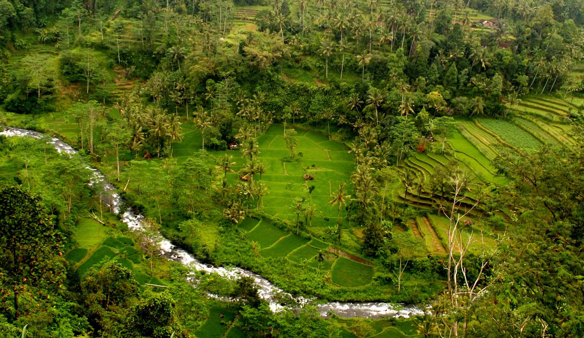 Ubud - Bali Tours Activities