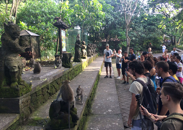 Sacred Monkey Forest Ubud - Half Day Tours in Bali