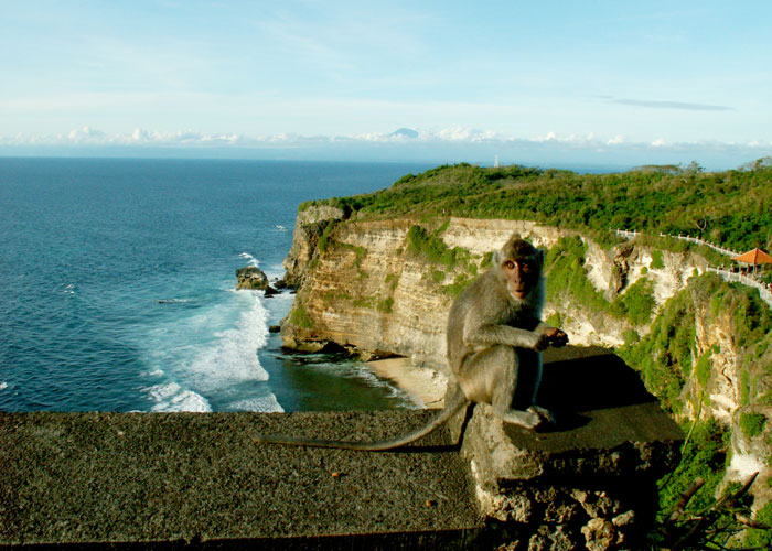 Uluwatu Monkey Forest - Half Day Tours in Bali